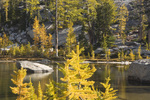 WASHINGTON - Larch trees growing around the shores of Temple Lake in the Enchantment Lakes Basin in the Alpine Lakes Wilderness of the Wenatchee National Forest.