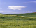 WASHINGTON - Wheat fields in the fertile Palouse Region of Eastern Washington.