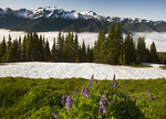 WASHINGTON - Mount Olympus from the a meadow on High Divide in Olympic National Park.
