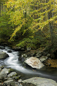NC00215-00...NORTH CAROLINA - Autumn along the Oconaluftee River in Great Smoky Mountains National Park.