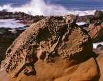 CALIFORNIA - Eroded sandstone along the coast at Bean Hollow State Beach.