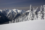 WASHINGTON - Snow plastered trees after a winter storm on Hurricane Ridge and the Olympic Mountains in Olympic National Park.