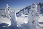 WASHINGTON - Snow covered trees on  Amabilis Mountain in the Okanogan-Wenatchee National Forest.