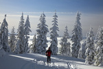 WASHINGTON - Cross-country skier on trail to the summit of Amabilis Mountain in the Okanogan-Wenatchee National Forest.