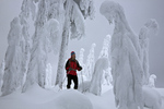 WASHINGTON - Cross-country skiing between snow covered trees near the summit of Amabilis Mountain in the Okanogan-Wenatchee National Forest.