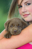 Teenage girl holding chocolate Labrador retriever puppy