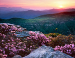 Carolina Rhododendron on the rim of the Linville Gorge at Sunset, Spring