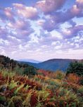 Autumn ferns with Great Smoky Mountains in distance, sunrise,