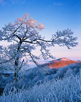 First light on mountain and rime-coated tree on winter morning atop Max Patch Mountain, Pisgah National Forest, NC