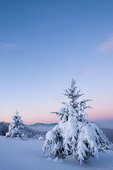 WD0151:Snow-coated Fraser firs at sunrise w/ Great Smoky Mountains in background, North Carolina-Tennessee state line, winter
