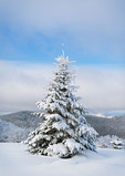 WD0168: Fraser fir topped by half moon in mountain meadow, TN-NC state line, winter