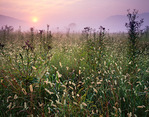 Cades Cove meadow at sunrise, Great Smoky Mountains National Park, TN, Summer