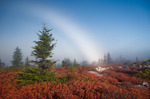 Fog Bow over Bear Rocks Preserve area of Dolly Sods, WV, Autumn