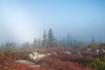 Fog Bow over Bear RocksDolly Sods, WV