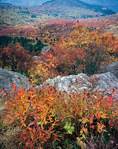 Fall Foliage, Black Balsam Knob, Pisgah National Forest, NC