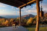 Dog on Log Cabin Porch, Tennessee-North Carolina state line, Autumn