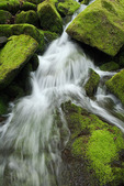 Cascade on Steep Branch, Great Smoky Mountains National Park, TN, Spring