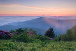 Catawba Rhododendron on the Roan Mountain massif at sunrise, Roan Highlands, NC-TN, June