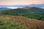 Sunrise, Max Patch, Pisgah National Forest, NC, late summer