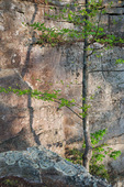 Sandstone Wall accessed via Climber's Loop and Fiery Gizzard Trail, Foster Falls Small Wild Area, Savage Giulf State Natural Area, TN