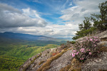 Grandfather Mountain in distance with Carolina Rhododendron growing in cliff crevices, Pisgah National Forest, NC, May