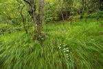 Northern Hardwood Forest, Joyce Kilmer-Slickrock Wilderness, NC-TN, summer