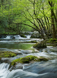 Middle Prong of the Little River, Great Smoky Mountains National Park, Tennessee, USA, Spring