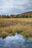 Wetlands along the Freeland Trail, Canaan Valley National Wildlife Refuge, West Virginia, Autumn