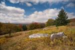 View from Blackbird Knob, Dolly Sods Wukderness, Monongehala National Forest, West Virginia