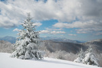 A clearing October storm leaves Fraser Firs in a mountain meadow blanketed in snow, TN. Cherokee NF and Great Smoky Mountains are in background.