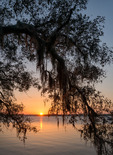 Sunset through Live Oaks draped with Spanish Moss, Cumberland Island National Seashore, GA