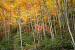 Hardwood forest, Cherokee National Forest, Autumn