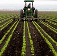 Tractor in lettuce fields