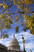 U.S. Capitol and fall leaves