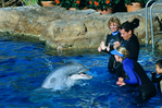 Dolphin Encounter at Sea World