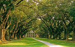 Oak Alley Plantation and canopy of Live Oak Trees