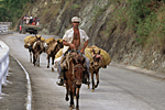 CUBA, Guantanamo province. Mule pack on road to Baracoa.