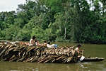 PERU. Amazonia, Loreto province. Family on the Amazon river travelling with the dog on a raft covered with dry palm leaves pulled by a canoe.
