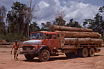 BRAZIL, South of Maranhao State where logging is prohibited but booming.