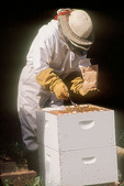 Beekeeper Medicates Her Bees Against Disease