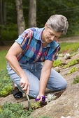 Woman Gardening in Massachusetts