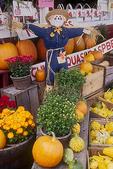 Massachusetts Farm Stand Selling Fall Favorites