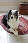 Abbi, Australian Shepherd
