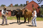 Visitors Learn to Drive Oxen at Old Sturbridge Village