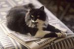 "Panda ""Reading the Paper"""
