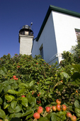 Beavertail Lighthouse and Rose Hips