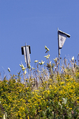 Bluebird Boxes Against a Blue Sky