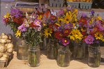 Flowers for Sale at a Farm Stand