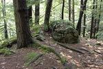 Hemlocks and a Rock