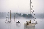 Sailboats in Foggy Robin Hood Cove